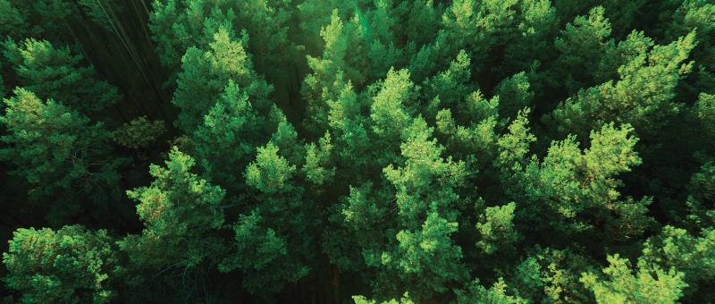 Giornat-Mondiale-delle-Foreste