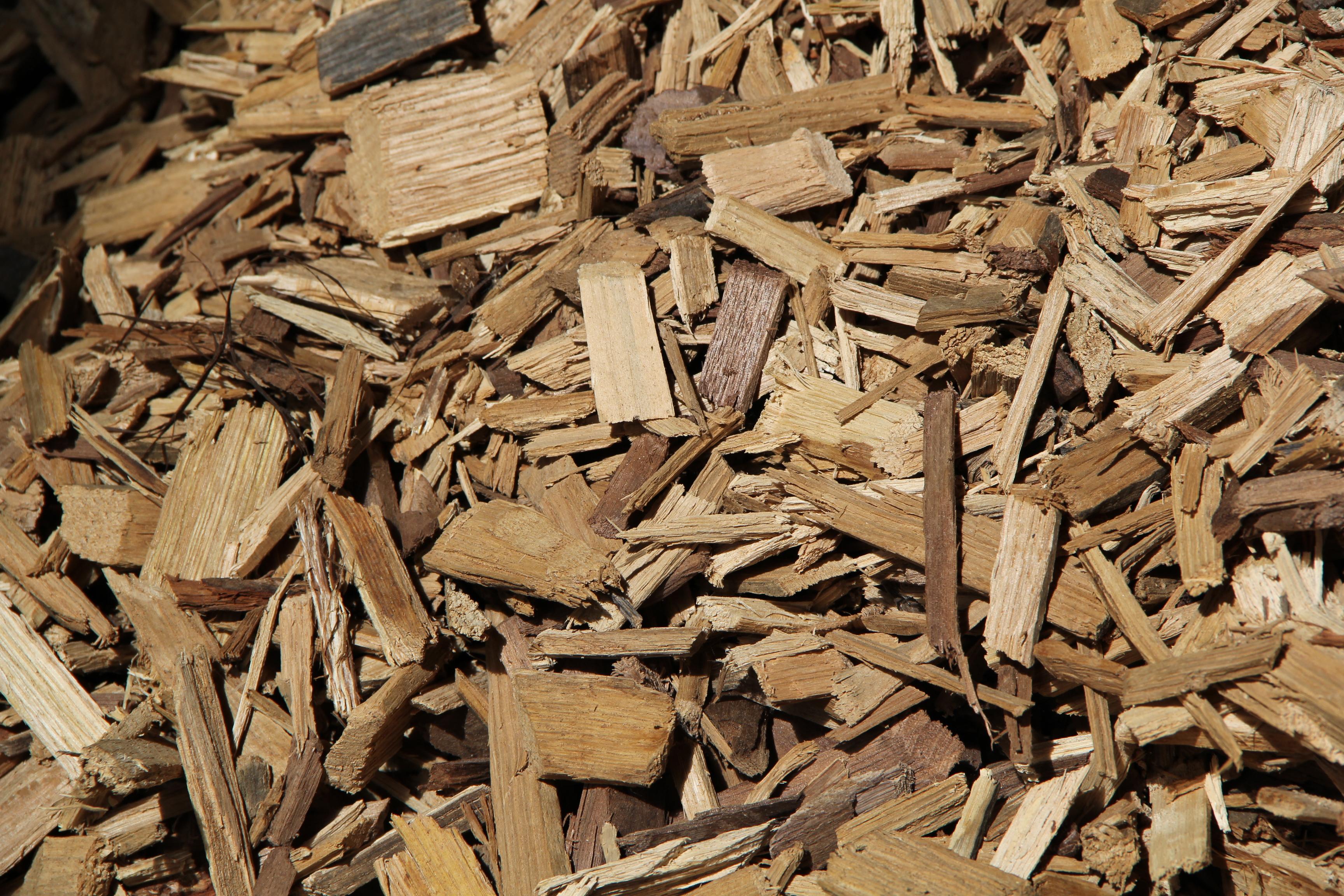 Che Cos È Il Legno che cos'é la biomassa legnosa? - energia dal legno