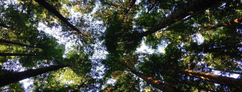 gestione forestale sostenibile